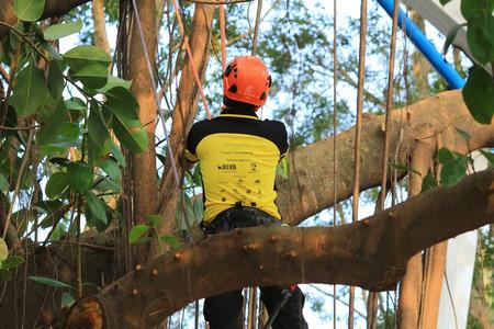 keirin: tree climber hanging