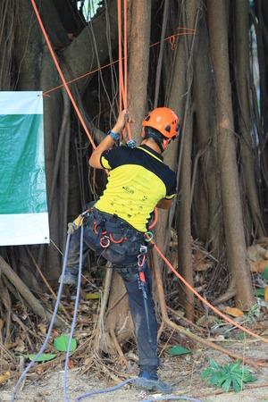 trial indoor: tree climber hanging