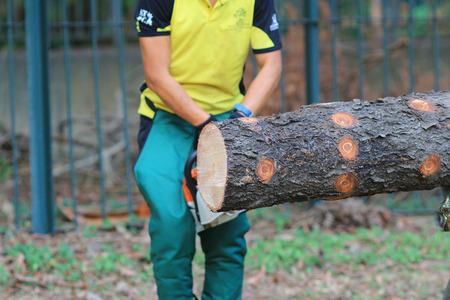 logger: Lumberjack logger worker in protective gear cutting firewood timber tree Stock Photo
