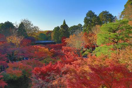 Beautiful walkway over the trees in Tofuku-ji temple, Japan photo