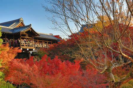 Beautiful walkway over the trees in Tofuku-ji temple, Japan