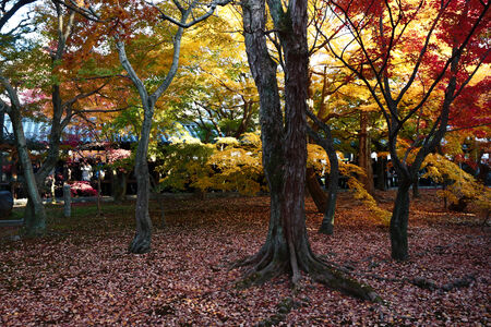 hon: Tofuku-ji temple, Japan