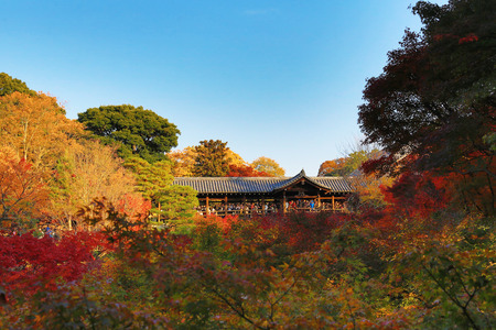 Tofuku-ji temple, Japan