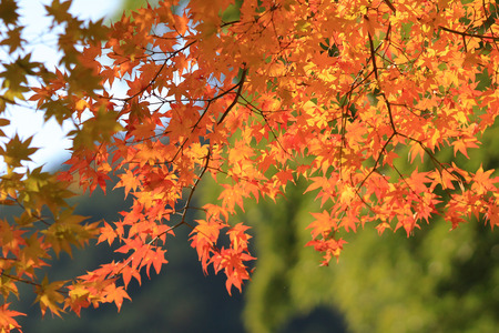 fall season in japan temple