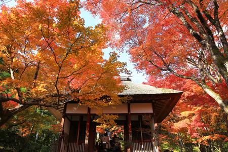 momiji: Jojakuko Temple Stock Photo