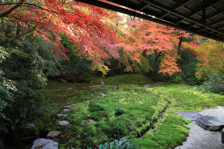 Temple in Kyoto, Japan during the fall season 版權商用圖片 - 44143769