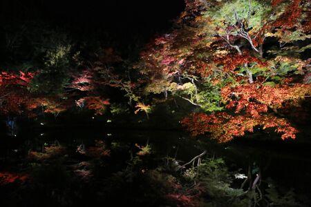 miracle leaf: fall season of kodaiji night