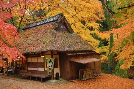momiji: Tea House at fall season  Nana, japan