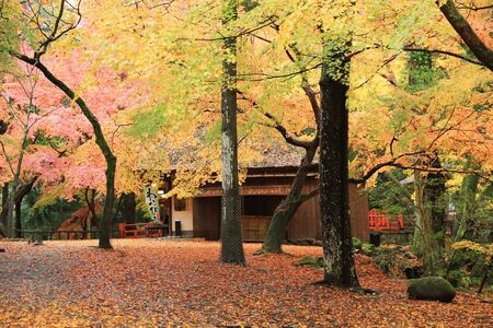 nara park: Nara Park in Nara, Japan Editorial