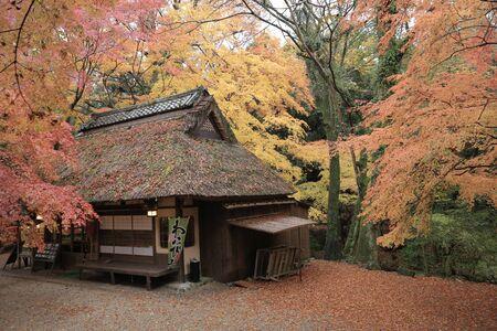 nara: Nara Park in Nara, Japan Stock Photo