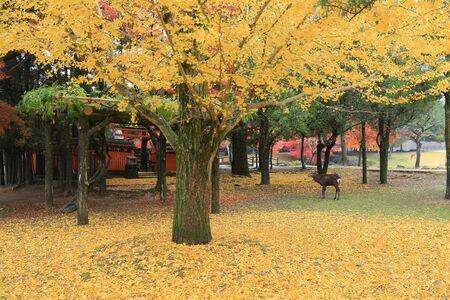 nara park: Nara Park in Nara, Japan Stock Photo