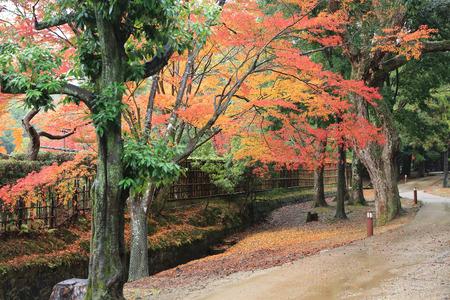 nara park: nara park, fall
