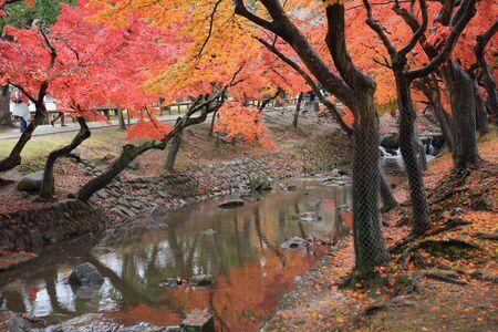 nana: Nana park at fall