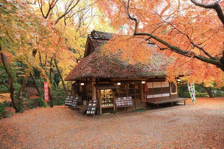 nara park: Japanese lanterns at Nara Park