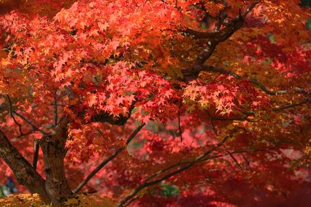 fall season in japan Stock Photo