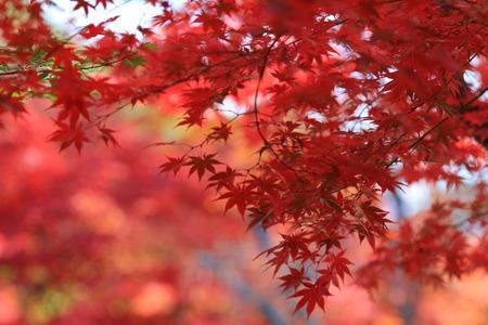 fall season in japan photo