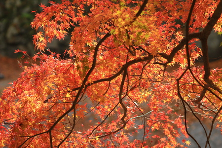 fall season in japan temple photo
