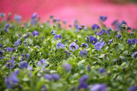 flower show: Fiore spettacolo hong kong a Victoria Park Archivio Fotografico