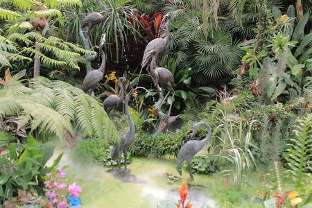 back yard pond: Flower show hong kong at Victoria Park