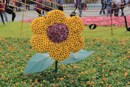 flower show: Flower show hong kong at Victoria Park