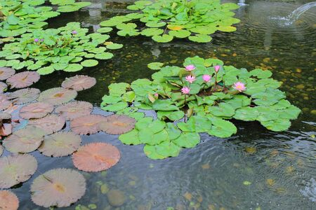 in particular: a particular view of a waterlily Stock Photo