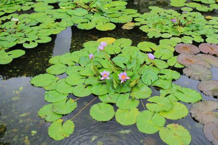 particular: a particular view of a waterlily Stock Photo