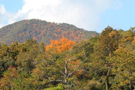 rokuonji: Kinkaku-ji Zen Buddhist temple fall season