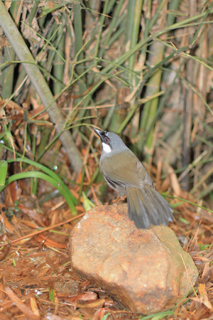 calved: Bird waiting drinking