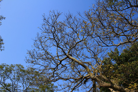 vegatation: winter tree