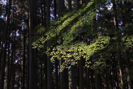 twentysomething: Japan kyoto at fall season Stock Photo
