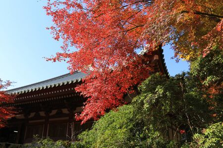 twentysomething: the Daigoji Temple Japan kyoto at fall season Editorial