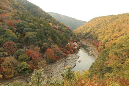 kink: Autumn Leaves Of Arashiyama Stock Photo