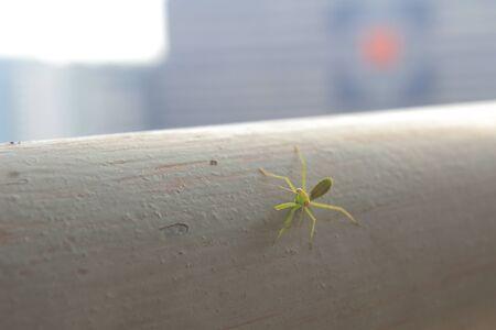 praying mantis: a Beautiful small praying mantis