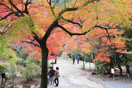 kink: Autumn Leaves Of Arashiyama Editorial