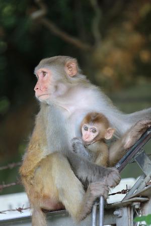 captivating: the monkey in Kam Shan Country Park, Kowloon, Hong Kong