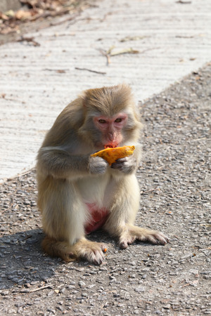 the monkey in Kam Shan Country Park, Kowloon, Hong Kong