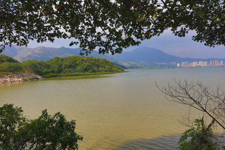 wetland: the Plover Cove Country Park  LUK KENG