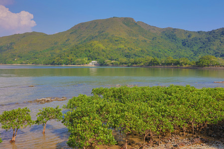 wetland conservation: the Plover Cove Country Park  LUK KENG