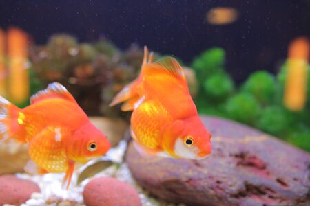 Goldfish Treasures in Ocean Park  in Hong Kong