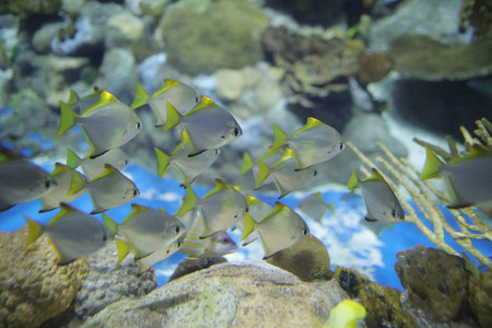 salt water fish: the salt water fish in the ocean or aquarium Stock Photo