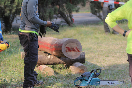 treetrunk: the Professional gardener cutting tree with chainsaw. Editorial