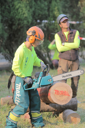 chainsaw: the Professional gardener cutting tree with chainsaw. Editorial