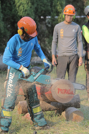 tree cutting: the Professional gardener cutting tree with chainsaw. Editorial