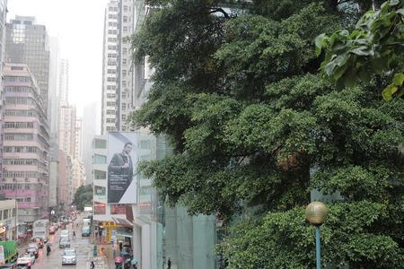 chai: the wan chai, Hong Kong at day time Stock Photo