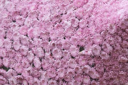 flower bed: the Flower bed at hk flower show 2016