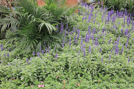 flower beds: the flower beds in formal garden