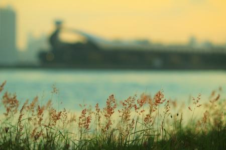 tong: the grass at Kwun Tong Tsai Wan sunset Stock Photo