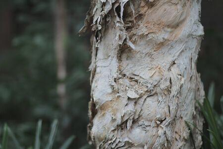 나무 껍질 세부와 닫습니다