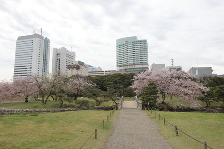 tourisms: nice example of a traditional Japanese garden in an urban