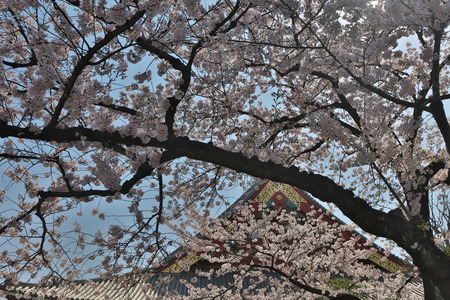 reincarnation: Asakusa Denpoin Gardens  Tokyo�s Hidden Gem Editorial
